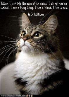 """CATS / PETS """"When I look into the eyes of an animal"""". For the love of pets / a few of my favorite things Crazy Cat Lady, Crazy Cats, I Love Cats, Cute Cats, Funny Cats, Cat Quotes, Animal Quotes, Life Quotes, Beautiful Cats"""