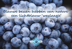 Blauwe bessen hebben van nature een lichtblauw 'waslaagje'. Let er bij het kopen van blauwe bessen dan ook altijd op dat ze vers, mooi en stevig uitzien én een lichtblauw waslaagje hebben. Dit is een soort bewijs van kwaliteit en versheid is! #vers #seizoen #blauwebes #simplythebes