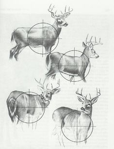 Deer hunting diagram
