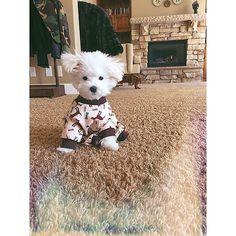 demi lovato's dog on Instagram-- SO CUTE :)