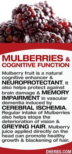 JOJO POST FOREVER YOUNG: Mulberry fruit is a natural cognitive enhancer & neuroprotectant. It also helps protect against brain damage & memory impairment in vascular dementia induced by cerebral ischemia. Regular intake of Mulberries also helps stops the deterioration of vision & greying hair. Mulberry juice applied directly on the head can promote healthy growth & blackening of hair.