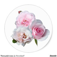 Three pink roses. classic round sticker, sticker, photo, photography, artwork, buy, sale, gift ideas, zazzle, shop, rose, flower, three, light, white, tenderness, love, three, bunch, bouquet, garden, craft supplies