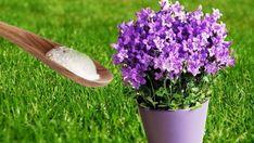 Put Baking Soda On Your Garden Plants and This will Happen - Watch Video - Garten Outdoor Plants, Garden Plants, Outdoor Gardens, Flowering Plants, Container Gardening, Gardening Tips, Composting Process, John David, Garden Care