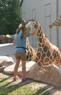It's Hug A Giraffe time! ❤ This is something I'd love to do! I love giraffes so much!