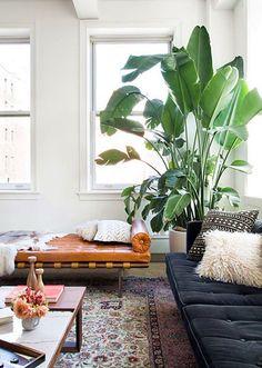 sala de estar com plantas
