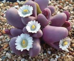 Interesting plant. Sorry I don't know the name. Ilginç bir bitki. Üzgünüm, bilmiyorum.