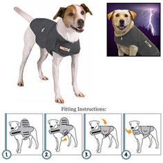 Do ghosts and goblins spook your pooch?  Calm his fears with a Thundershirt! $39.95