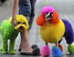 perros-arcoiris