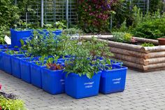 planting patio garden in recycling containers