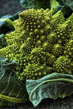 broccoli romanesco the fractal vegetable