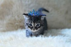 This pretty princess who makes tiaras look super adorable. #love #kitty
