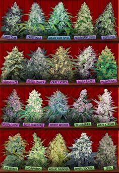 8 Best Grateful Dead images in 2018 | Cannabis, Marijuana