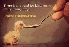 There is a reward for kindness to every living thing. [Prophet Muhammad] Islam, animal rights, animal love, compassion Islamic Quotes, Quran Quotes, Qoutes, Life Quotes, Hadith Quotes, Prophet Muhammad Quotes, Islamic Posters, Lovers Quotes, Heart Quotes