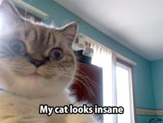 20 Funny Animal Pics for Your Wednesday | Love Cute Animals