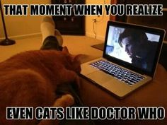 Cats love the doctor :D