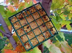 No-Melt Suet (For Birds) from Food.com: This is a tried and true suet recipe that I found in Birds and Blooms Extra, contributed by Virginia Barnard. She explains that it works very well in Oklahoma's high summer temperatures. We live in Wisconsin, where it obviously isn't quite as hot, but it has held up here, even in direct sun. The squirrels like it too, but now that we're offering other food for them, a little ways away, they aren't bothering it as much as they were at first. The recipe…