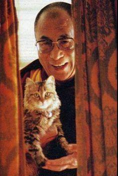 Dali Lama likes cats !