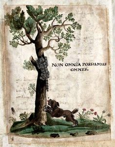 """The Latin caption means """"Not everyone can do everything"""" -- in this case, the dog cannot climb trees -- fortunately for the tabby cat! A miniature painted in the album amicorum of Paul Jenisch -- and really, an advert for my """"album amicorum"""" board -- q.v. !"""