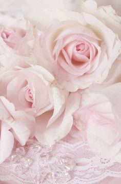 soft pink crystal rose Stock Photo by KaleylArts My Flower, Flower Power, Pink Roses, Pink Flowers, Cut Flowers, Pretty In Pink, Beautiful Flowers, Couleur Rose Pastel, Rose Family
