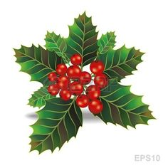Beautiful holly christmas branch. Vector