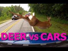 Deer vs Cars || Ultimate Dash Cam Fails Compilation visit http://vidleak.tv/index.php/player/18/346