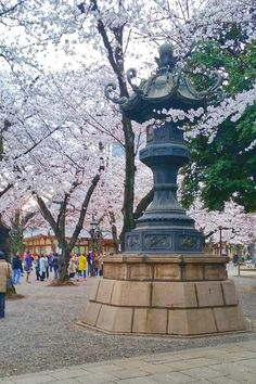 How is Yasukuni Shrine for cherry blossoms in Tokyo? Tokyo Japan Travel, Japan Travel Tips, Asia Travel, Cherry Blossom Japan, Cherry Blossoms, Tokyo Imperial Palace, Yasukuni Shrine, Japan Spring, Best Travel Guides