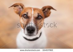 Dogs Stock Photos, Images, & Pictures | Shutterstock