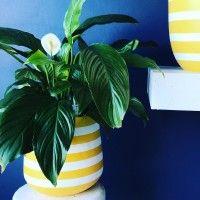 Indoor Flower Pots, Earth Design, Plant Leaves, Gallery, Plants, Vases, Plant Pots, Roof Rack, Plant