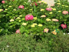 Hint van 9 juni: Vlinder 7 had zin in een mooi kleurenpalet, waar? Hint: er klinken heel veel vrolijke kinderstemmen in de nabije omgeving... Als je 'm vindt, bewaar je vlindertje goed en neem het mee naar het heropeneningsfeest van Bibliotheek Bloemendaal om 10:00 uur op 21 juni. Je krijgt dan een klein cadeautje!