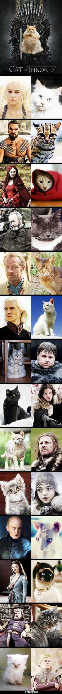 Cat Of Thrones #lol #haha #funny