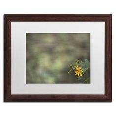 "Trademark Art ""Yellow Daisy Abstract"" by Kurt Shaffer Framed Photographic Print Size: 1"