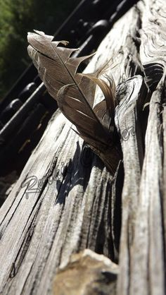 """Feather, Port Stanley Terminal Rail, Port Stanley #26, 11""""x14"""" - $35. Other sizes available upon request. Comment, send a message, or email perkyandquirky@gmail.com to order. Ontario, Feather, Photography, Quill, Photograph, Photography Business, Photoshoot, Feathers, Fotografie"""