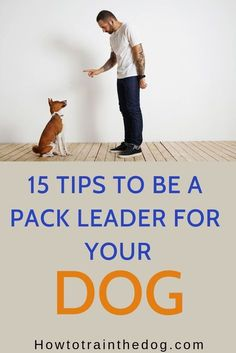 How To Be A Pack Leader Of Your Dog Tips) Dogs are amazing companions and very loyal animals. However, every dog needs to have an alpha. Here are some of the things you will need to do for you to be the pack leader. Training Your Puppy, Dog Training Tips, Training Classes, Training Videos, Potty Training, Training School, Alpha Dog Training, Training Pads, Agility Training