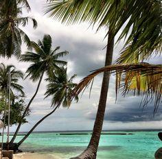 Malediven pur !!! Bungalows, Delphine, Outdoor Furniture, Outdoor Decor, Rainy Season, Snorkeling, Maldives, Diving, Explore