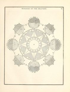 Reproduction Natural History Conchology Print #01