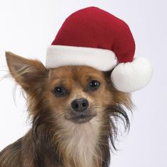 $3.95-$15.99 This soft, adorable fleece hat is perfect for holiday parties and photos! With an adjustable chin strap.