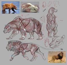 Muscles animal anatomy в 2019 г. Cat Anatomy, Animal Anatomy, Anatomy Art, Anatomy Drawing, Anatomy Study, Human Anatomy, Animal Sketches, Animal Drawings, Art Drawings