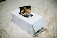Le #LOLcat du jour