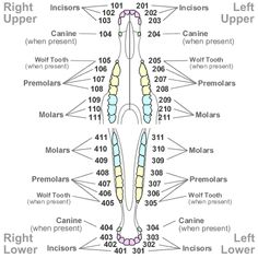 A diagram of the body parts of a cow | 4-H Project ...