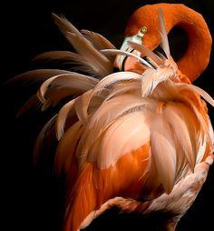 ~~Flustered ~ Flamingo by Cheri McEachin~~ Beautiful Birds, Animals Beautiful, Cute Animals, Inspiration Tattoos, Flamingo Pictures, Pattern Texture, Flamingo Art, Big Bird, Bird Feathers
