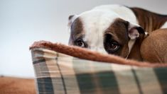 7 Warning Signs of an Unhappy Dog | DogSpaceBlog
