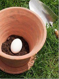 Coloque un huevo crudo sin fisuras en el bote