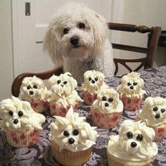 Cupcake Anyone (please note, I didn't take this pic, it was emailed to me from a friend in FB)