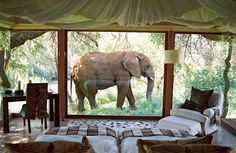 Room With A View, Nakanyane Safari Lodge, South Africa By Makanyane