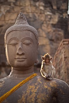 They are not so similar except for the mohawk...// by Fred BB, via Flickr. Buddha statue with monkey