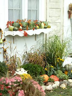 Pumpkin & Gourd Window Display