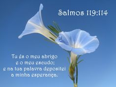 salmo 119,114 - Pesquisa Google