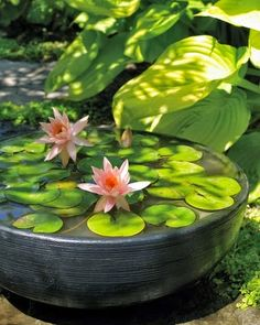 You don't need a pond to grow Water lilies, so bring them into your backyard gardening with a container water garden.