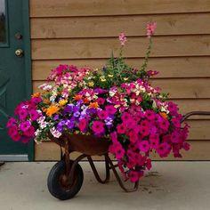 Wheelbarrow Garden