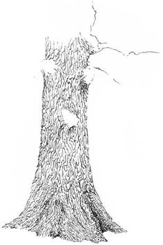 learn to draw trees, oak tree drawing lesson